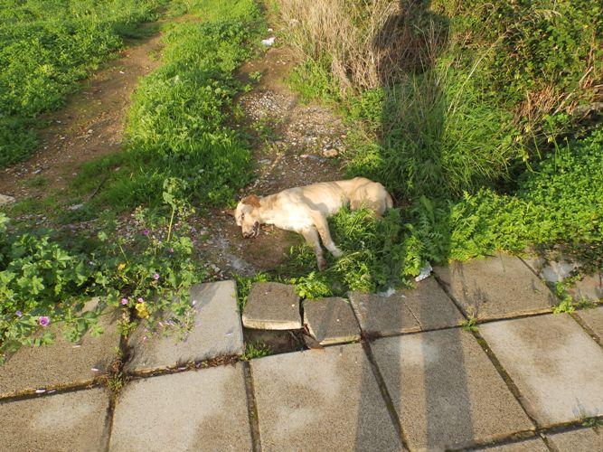 Νεκρά σκυλιά στη μέση του δρόμου στα Χανιά - Ασυνείδητοι τα «τάισαν φόλες» (φωτο)