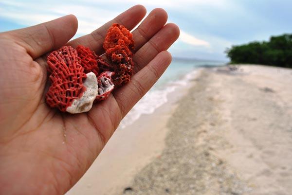 Τα κόκκινα κελύφη των μαλακόστρακων που θρυμματίζονται στην άμμο είναι αυτά που προσδίδουν τη ροζ απόχρωση.