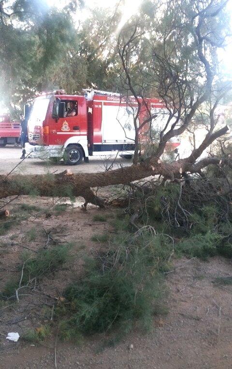 Παραλίγο τραγωδία στα Χανιά - Δένδρο έπεσε πάνω σε αυτοκίνητο (φωτο)