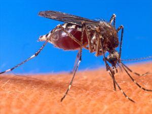 Σε επιφυλακή για επικίνδυνο κουνούπι στην Κρήτη