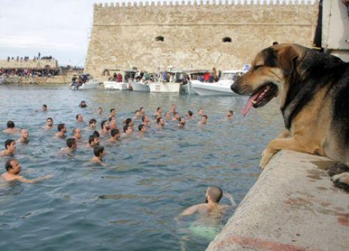 Κρήτη: Αυτός είναι ο σκύλος που έπεσε να πιάσει το σταυρό (photos)