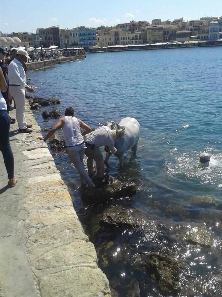 Έπεσε άμαξα με το άλογο μέσα στο ενετικό λιμάνι Χανίων (φωτο)