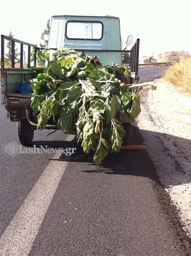 Το είδαμε και αυτό σε δρόμο της Κρήτης (φωτο)