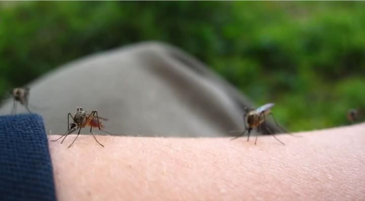 Θερίζουν τα κουνούπια στην Κρήτη