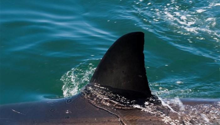 Ψάρευε παρέα με τον καρχαρία ανοιχτά της Γαύδου (φωτο)