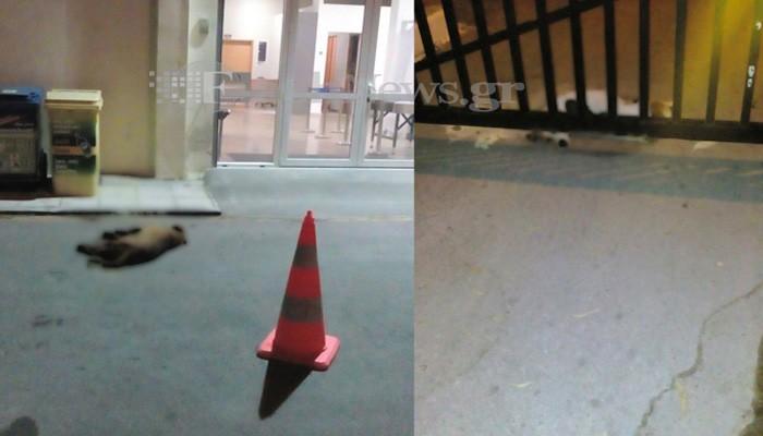 Σκόρπισε φόλες στο λιμάνι της Σούδας - Συλλέγουν νεκρά σκυλιά (φωτο)