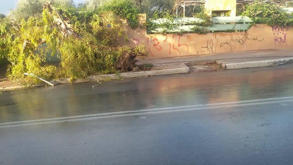 Τροχαίο στα Χανιά με θύμα ένα δέντρο (φωτο)