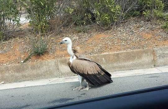 Πώς να είναι μεγάλο πουλί