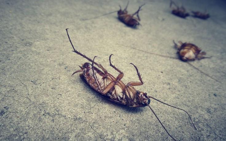 Δέκα παράξενα πράγματα που δεν ξέρετε για τις κατσαρίδες