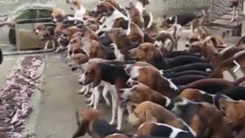Ο άνθρωπος που τα έβαλε με 100 σκυλιά και... νίκησε (video)