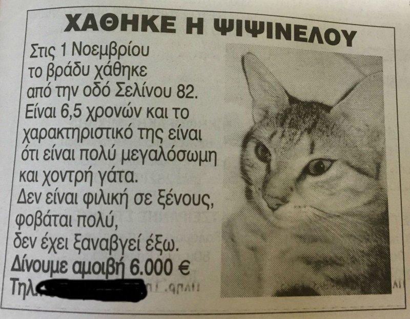 Χανιά: 6.000 € αμοιβή σε όποιον βρει γατάκι που χάθηκε (φωτο)