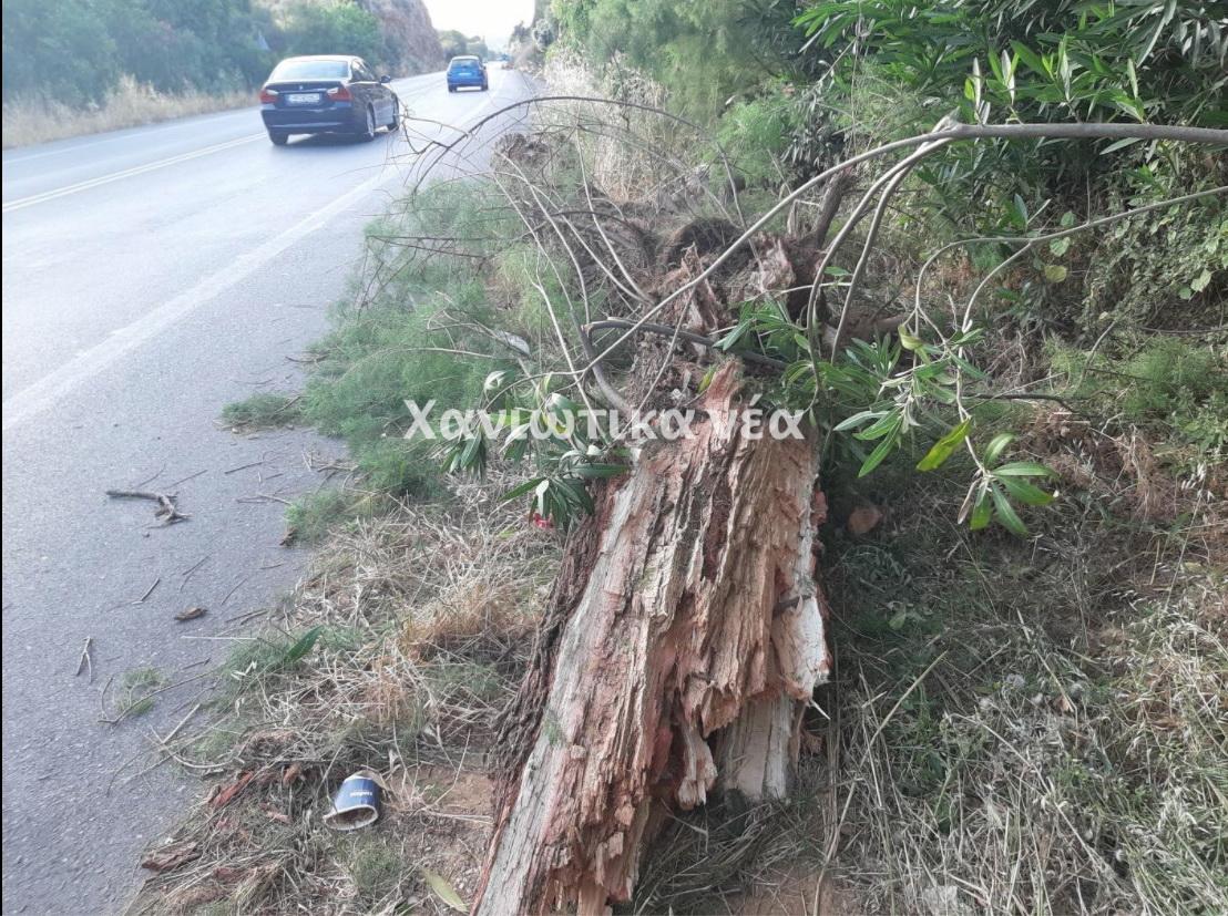 Χανιά: Δέντρο έπεσε στην εθνική στο Πλατάνι Σούδας (φωτο)